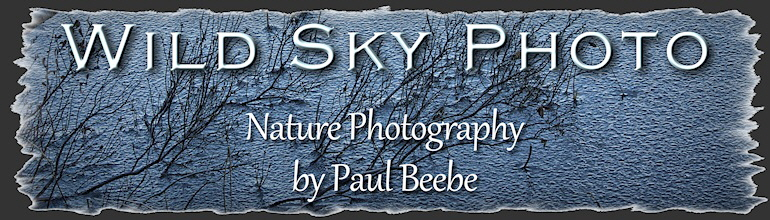 Wild Sky Photo - nature photography by Paul Beebe